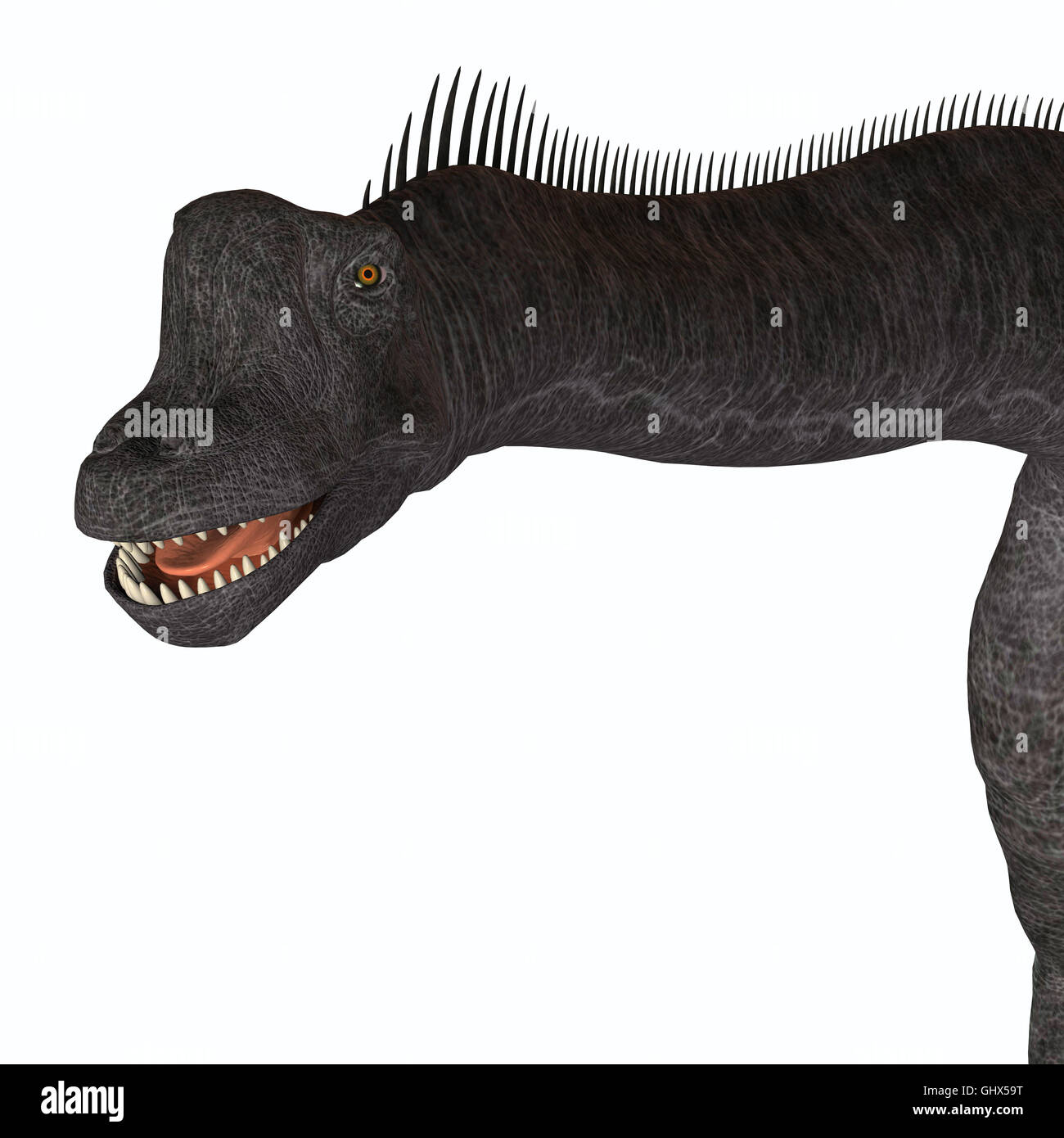Brachiosaurus was a herbivorous sauropod dinosaur that lived in the Jurassic Period of North America. Stock Photo