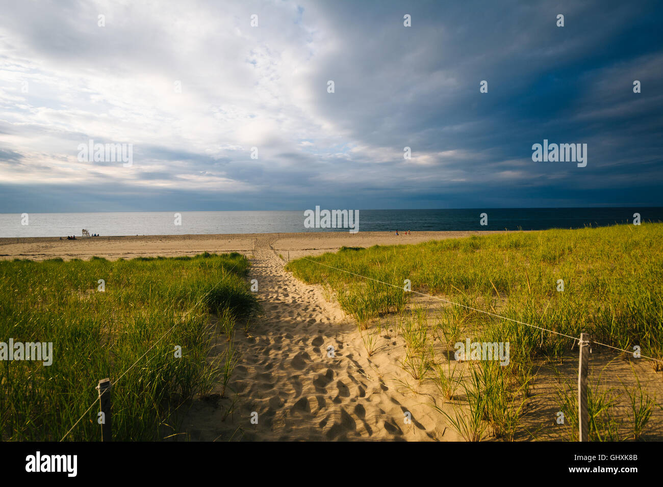 Grasses and path over sand dunes at Race Point, in the Province Lands at Cape Cod National Seashore, Massachusetts. - Stock Image