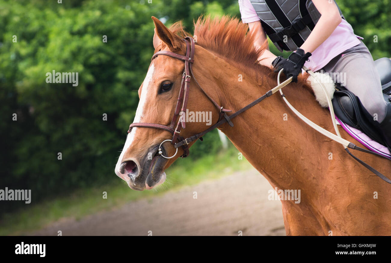 Young woman riding a horse - Stock Image