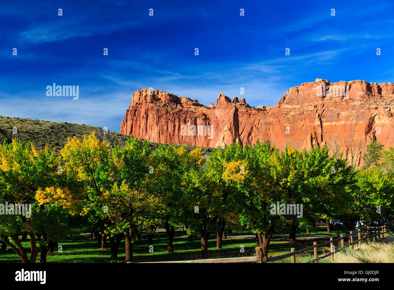 The Cass Mulford orchard starts to show the colors of the fall season in Fruita area of Capitol Reef National Park, - Stock Image