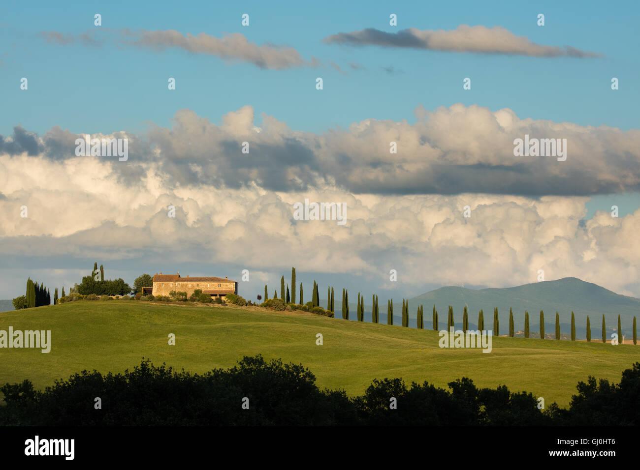 a villa and avenue of cyprus trees near Castiglione d'Orcia, Tuscany, Italy - Stock Image