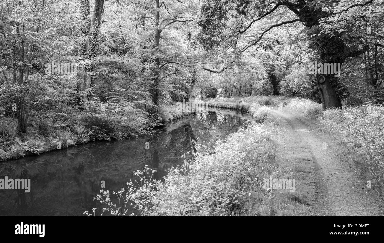 The Brecon to Monmouth Canal near Talybont on Usk, Brecon Beacons National Park, Powys, Wales, UK - Stock Image