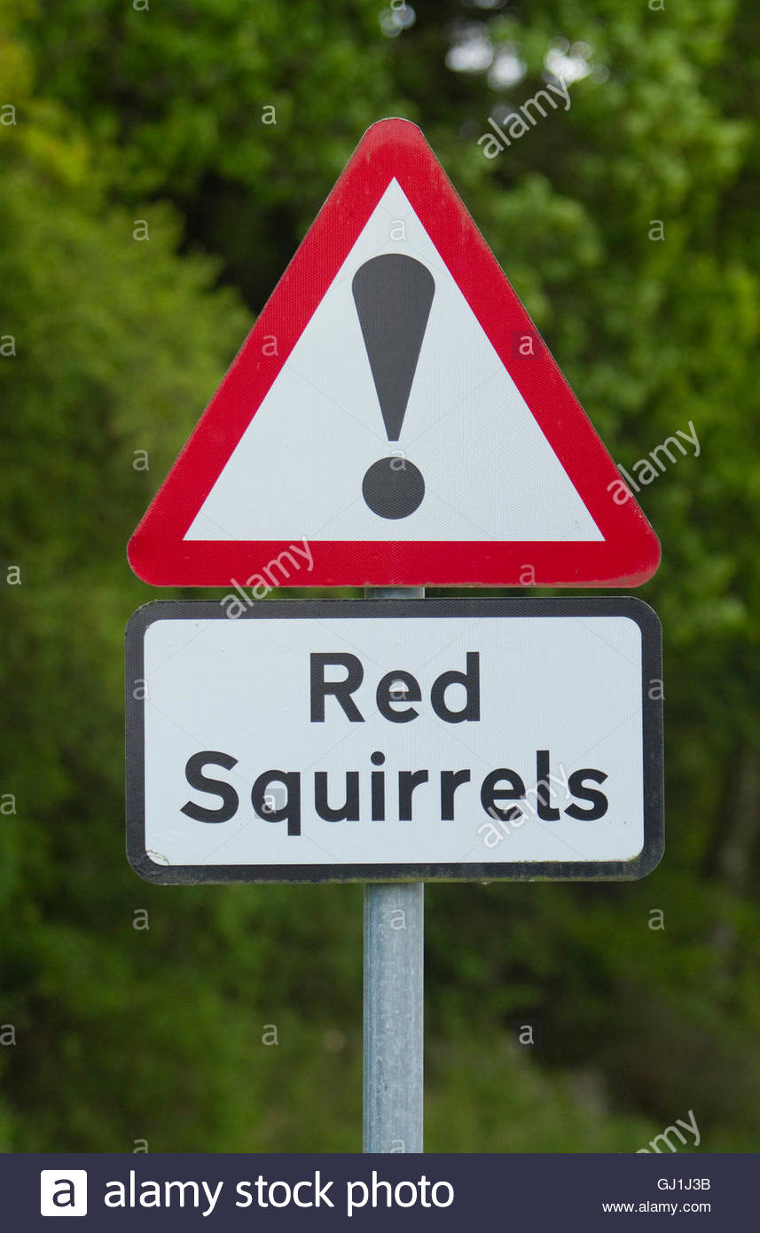 The road sign warning to beware of the possibility of red squirrels in Dumfries and Galloway, Dumfries and Galloway, - Stock Image