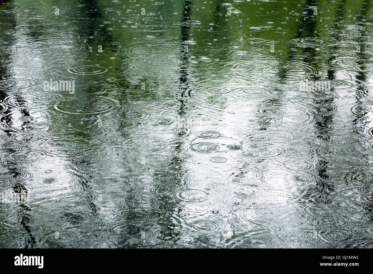 rain drops in a puddle with trees reflection - Stock Image