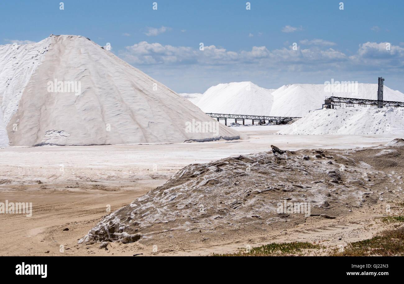 Surveying the Salt Piles. A lone iguana surveys the massive piles of white salt at the shipping terminal near rio - Stock Image