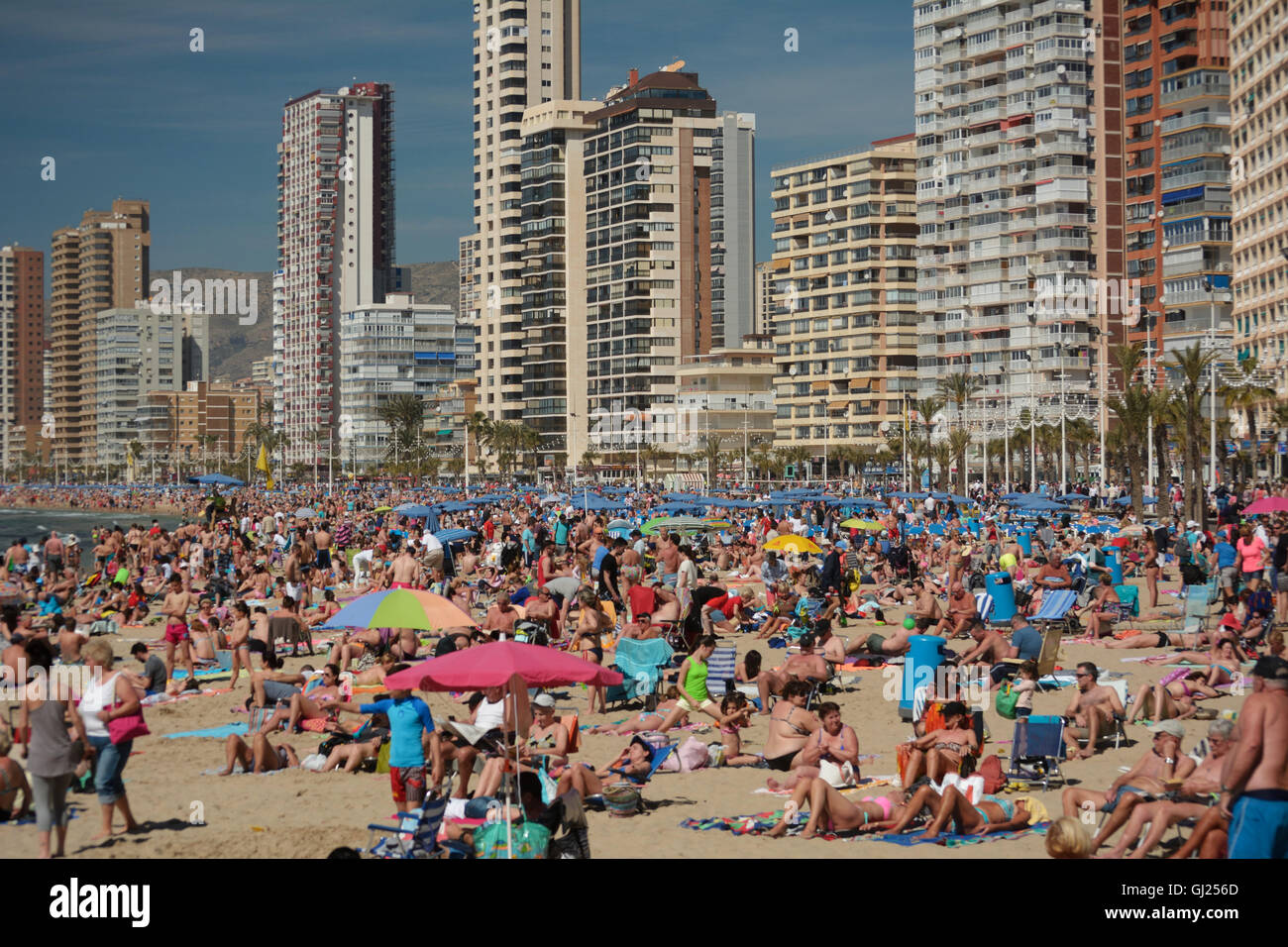 Spain, Benidorm, crowds sunbathing in Levante beach with high-rise buildings in the background - Stock Image
