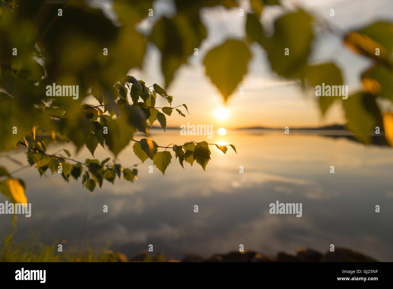 Sunset seen through leafs - Stock Image