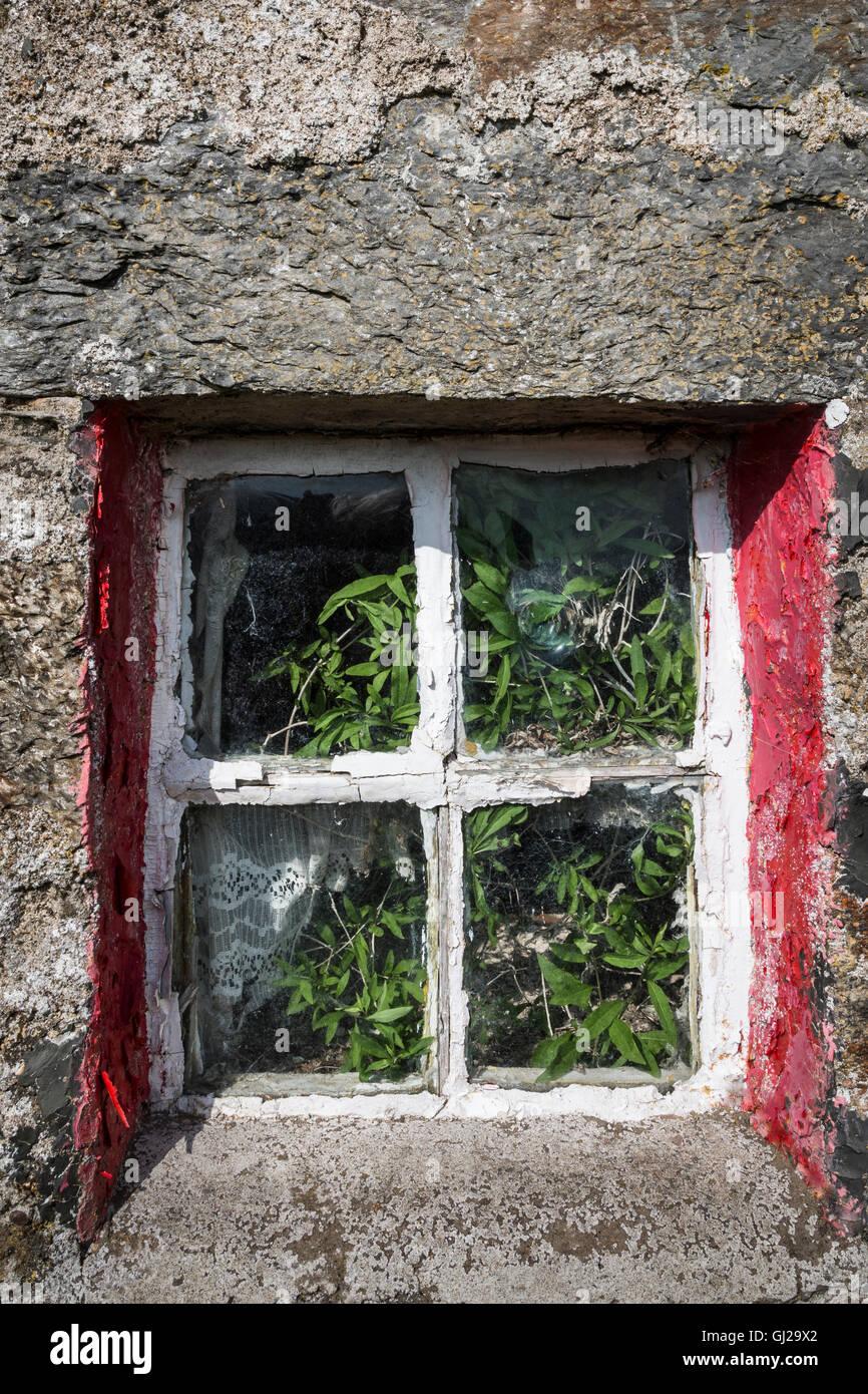 Window in Croft ruin in the Cabrach. - Stock Image