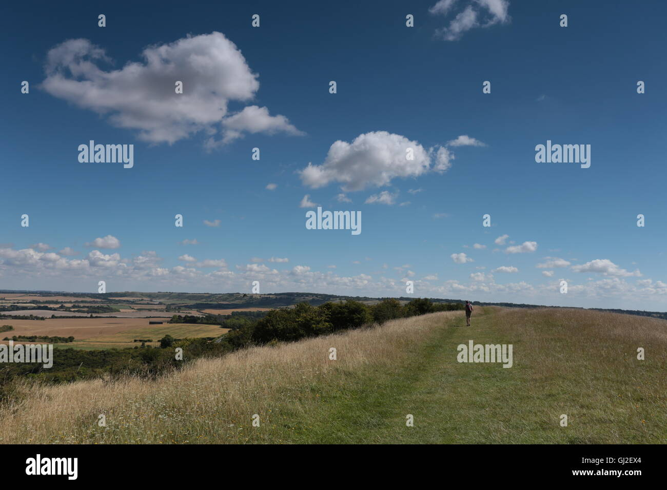A walker in the Chiltern hills ,Hertfordshire. - Stock Image