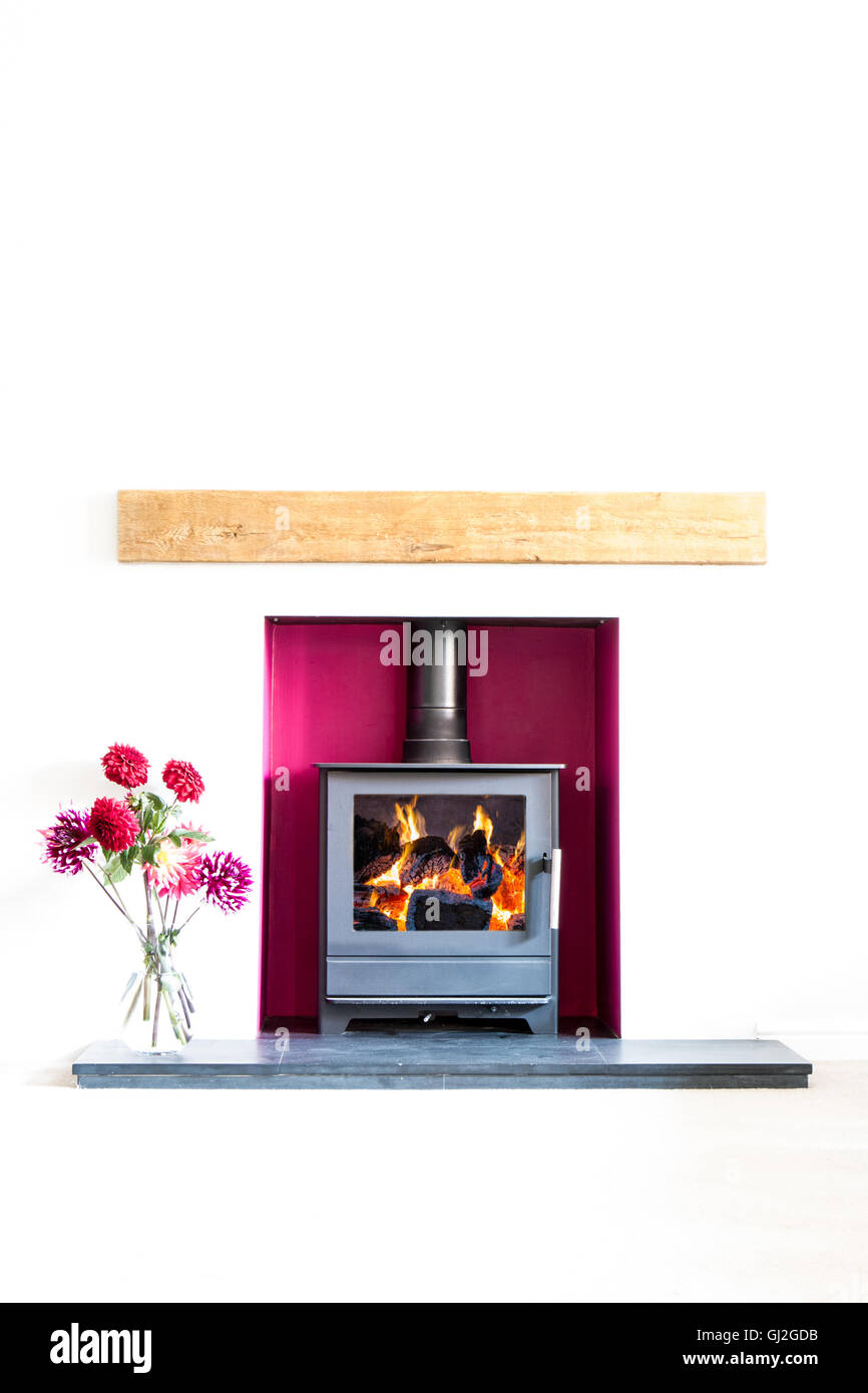 Wood burning stove, with blazing log fire, in a magenta coloured recess in a white room with a vase of dahlia flowers. - Stock Image