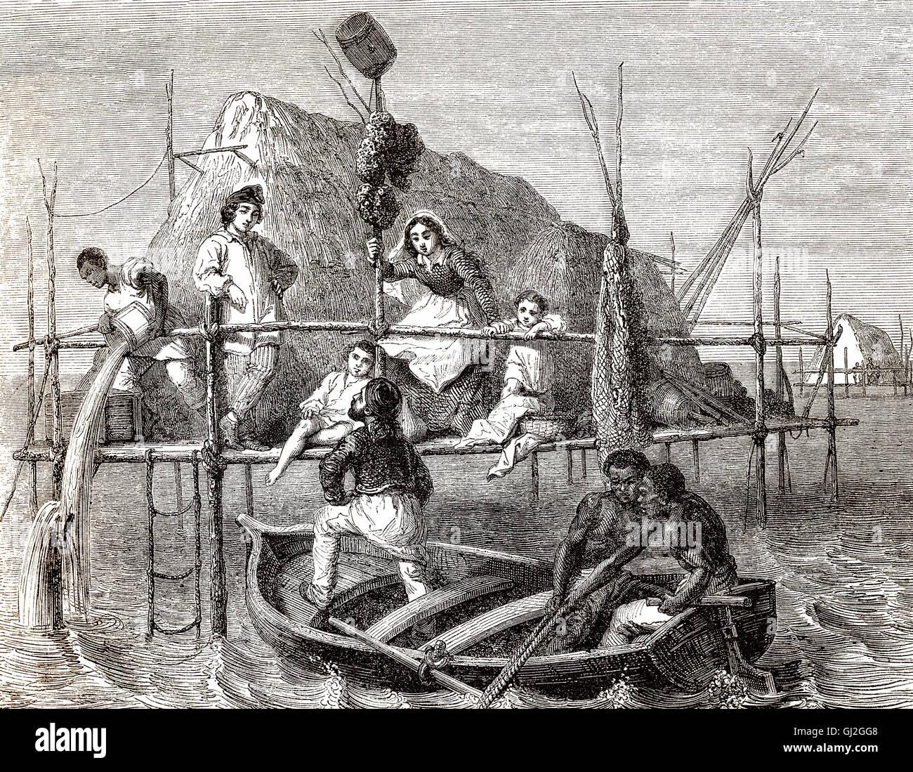 Sponge divers, Cuba, 19th century - Stock Image