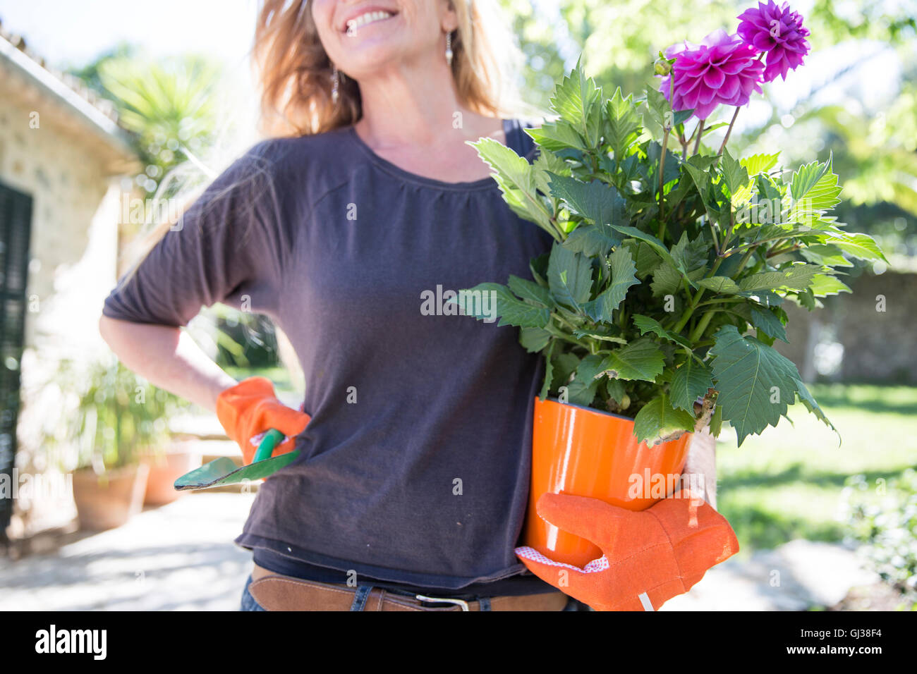 Woman carrying purple flowering plant in garden - Stock Image