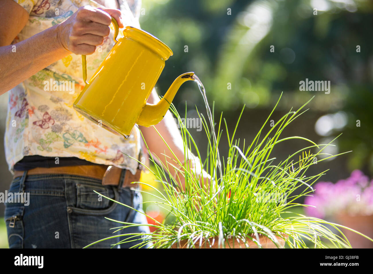 Cropped view of woman watering plants in garden - Stock Image