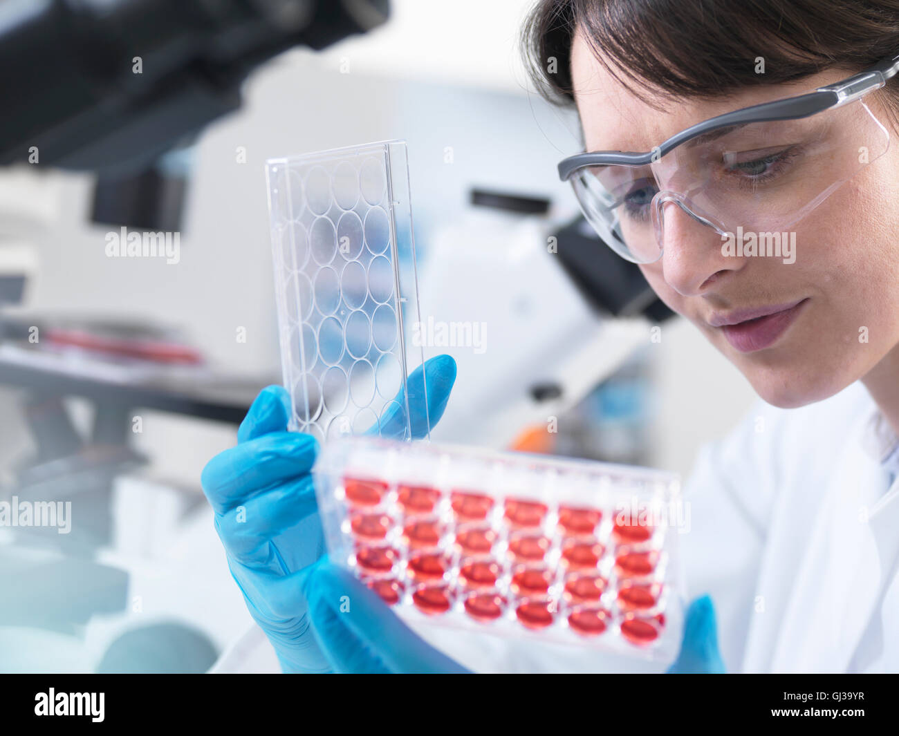 Scientist  viewing experimental cultures growing in multiwell tray in laboratory - Stock Image