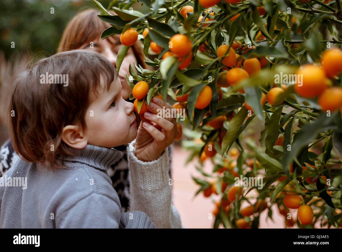 Mother and daughter smelling oranges on tree Stock Photo