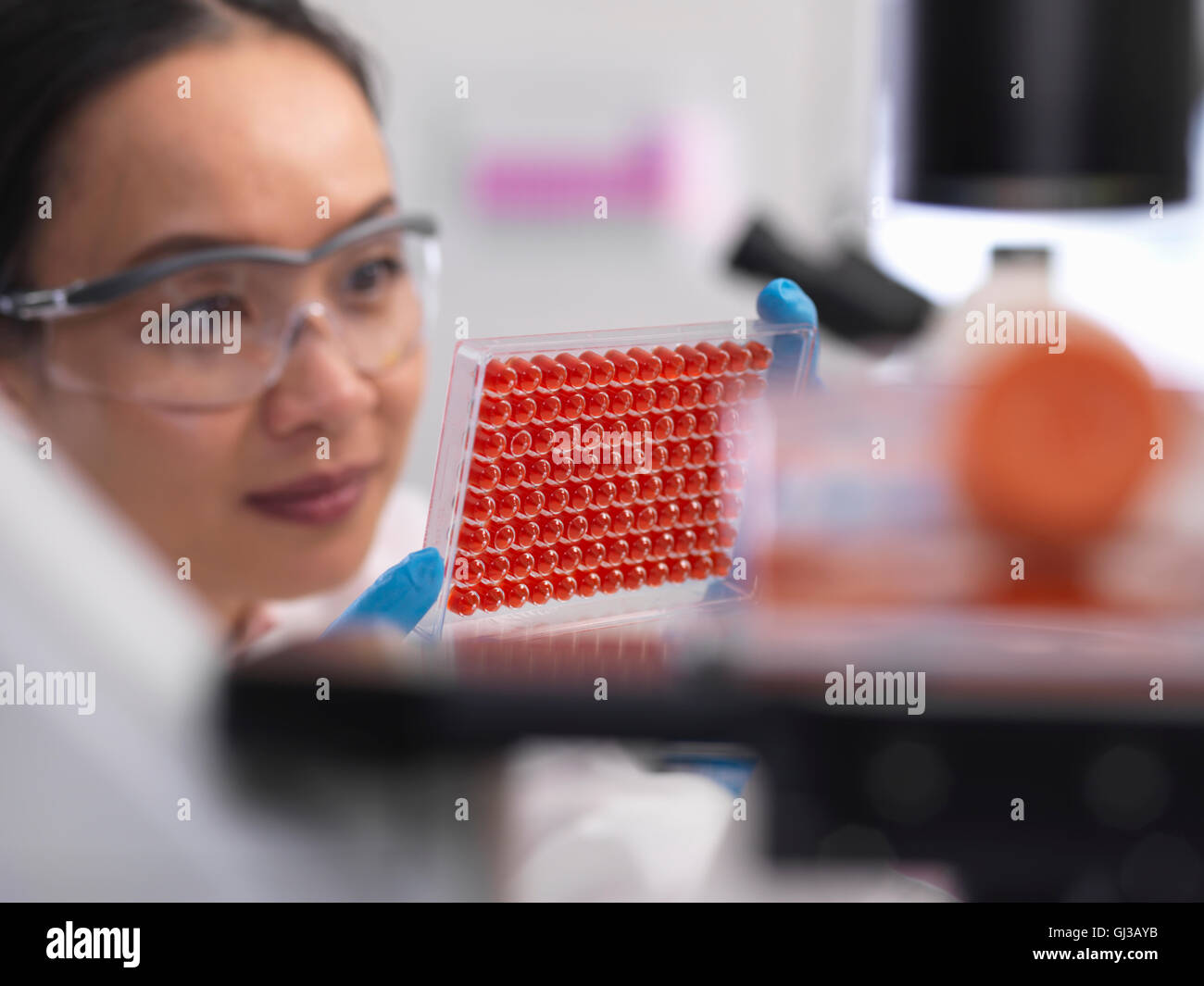 Scientist preparing a micro plate with blood samples for medical testing in a laboratory - Stock Image