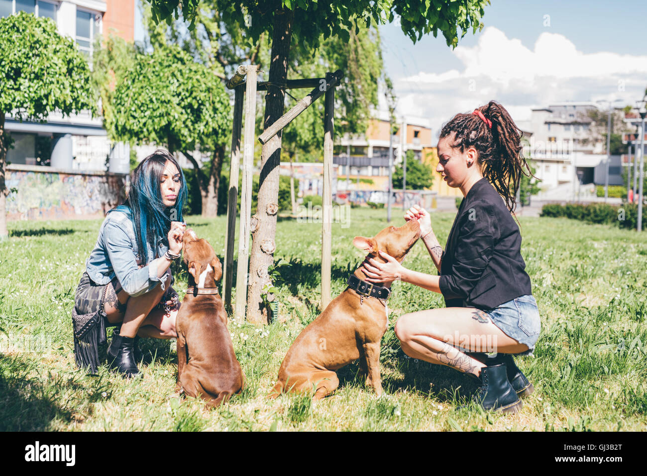Two young women petting pit bull terriers in urban park - Stock Image