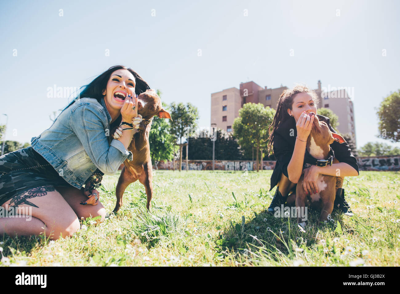 Two young women playing with pit bull terriers in urban park - Stock Image