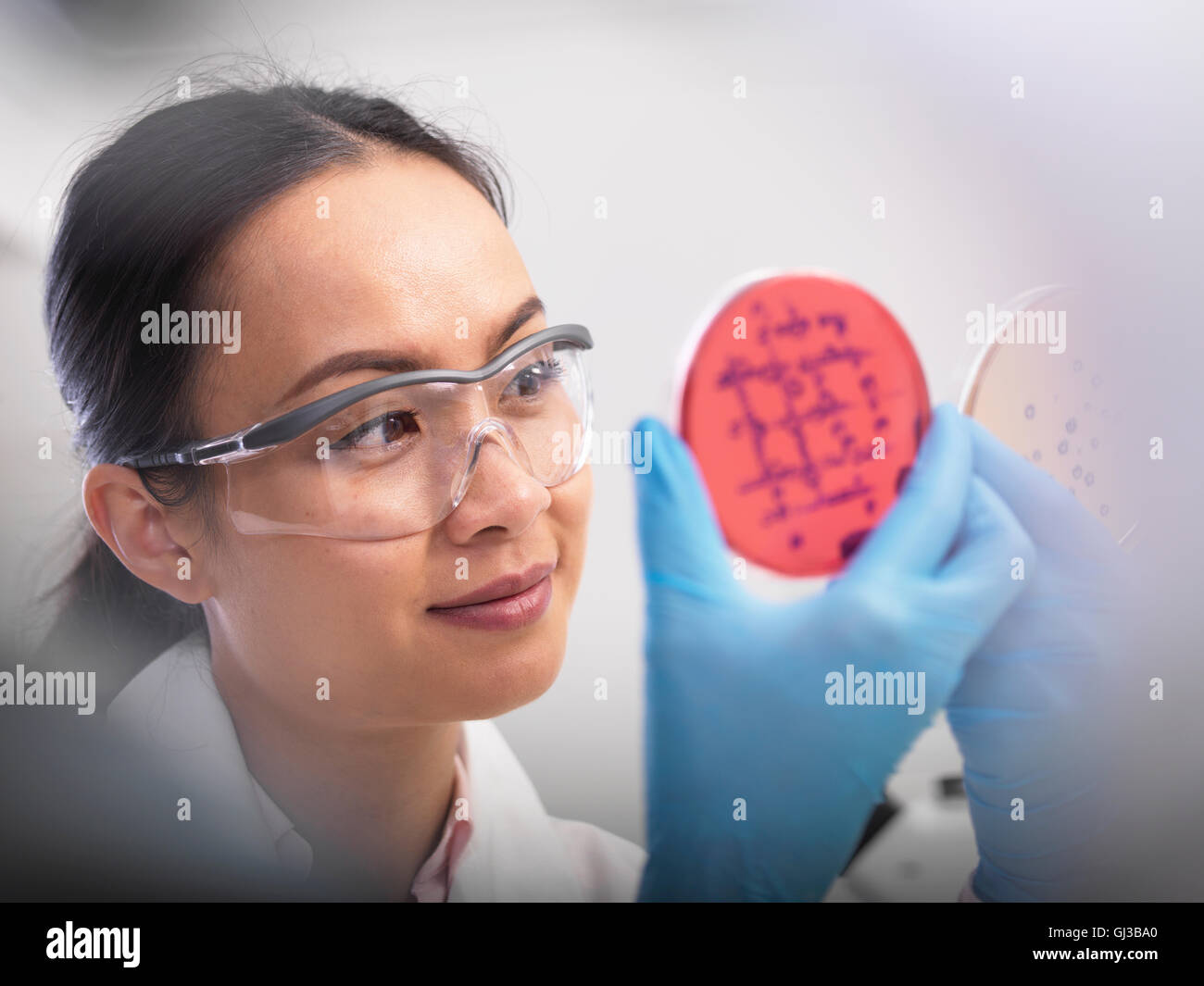 Scientist examining microbiological cultures in a petri dish - Stock Image
