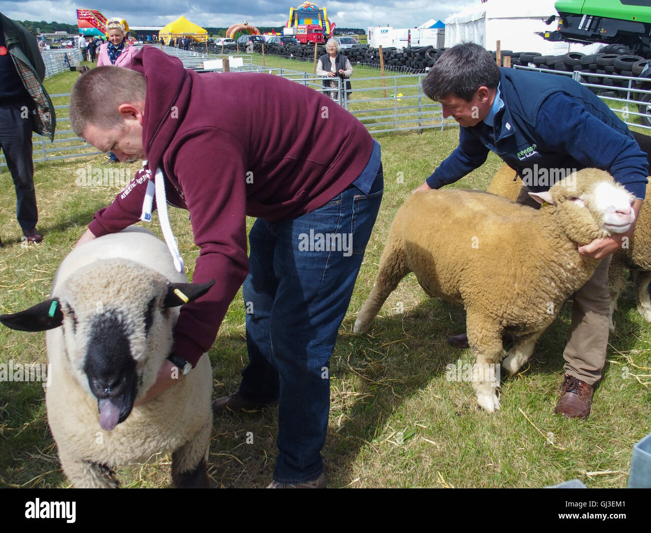 Judging Sheep, Haddington Show, East Fortune, East Lothian - Stock Image
