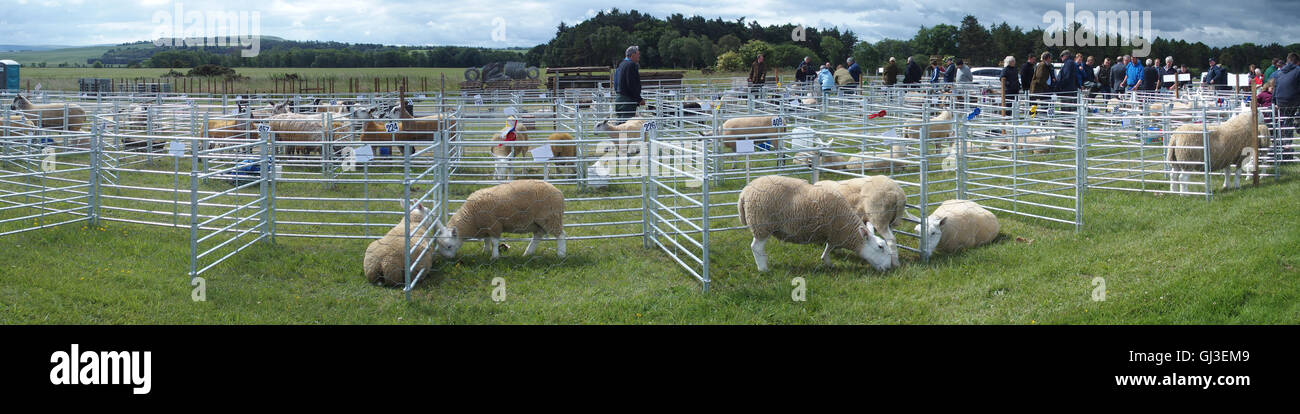 Sheep Pens, Haddington Show, East Fortune, East Lothian - Stock Image