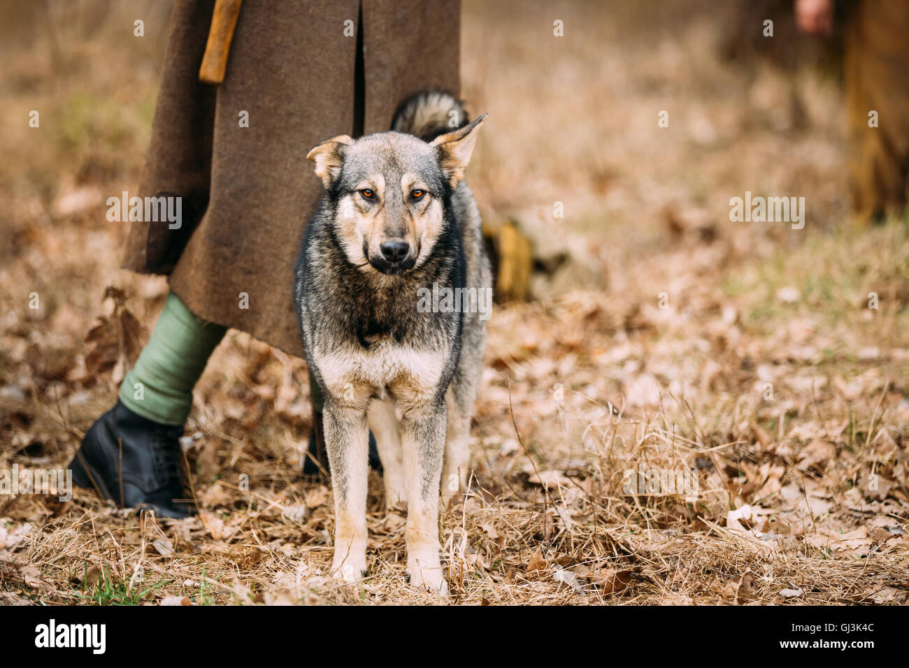 Hunting Breed Pet Stock Photos & Hunting Breed Pet Stock Images - Alamy