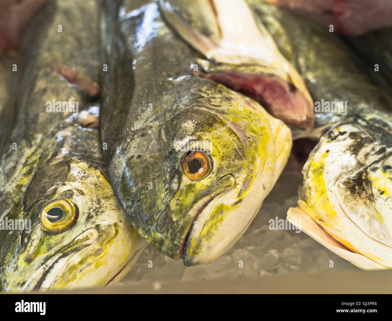 dh St George GRENADA CARIBBEAN Fish market fish heads close up fresh - Stock Image