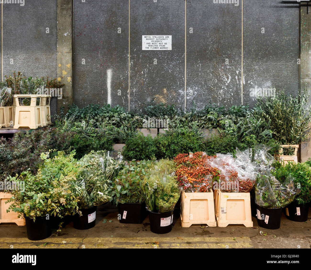 Plants in the flower market. New Covent Garden Market, London, United Kingdom. Architect: -, 1974. Stock Photo