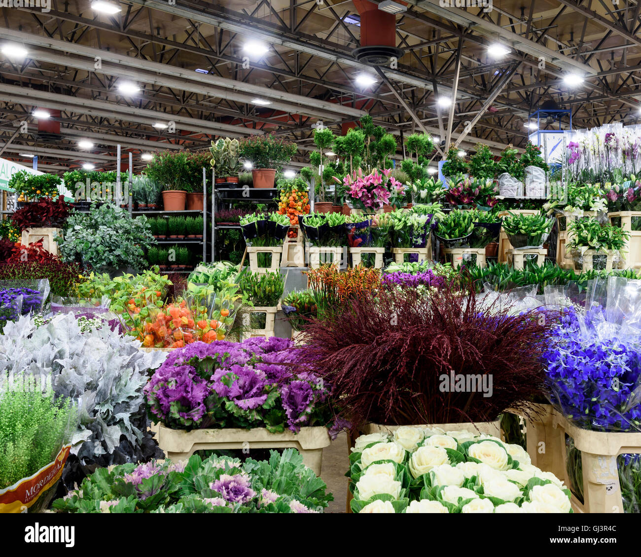 Plants in the flower market. New Covent Garden Market, London, United Kingdom. Architect: -, 1974. Stock Photo