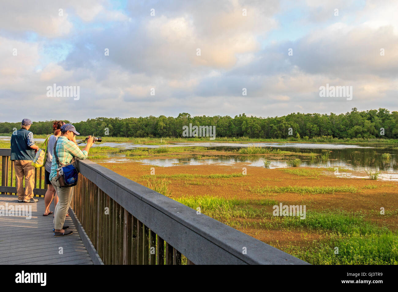 View from Cameron Prairie Natinal Wildlife Refuge Center boardwalk. Great place to learn about Louisiana's birds. - Stock Image
