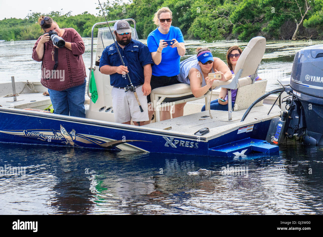 Boatload of visitors on Grosse Savanne Eco Tour trip photograph juvenile alligator in the water of a marsh in Cameron - Stock Image