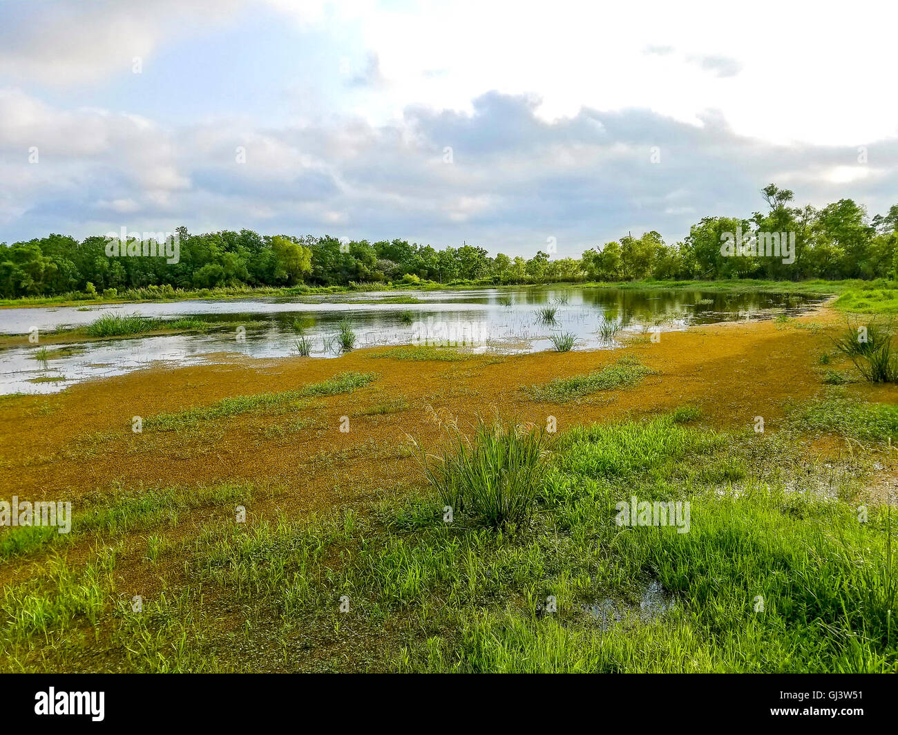 View from Cameron Prairie National Wildlife Refuge center boardwalk. Great place to see birds. Louisiana. - Stock Image