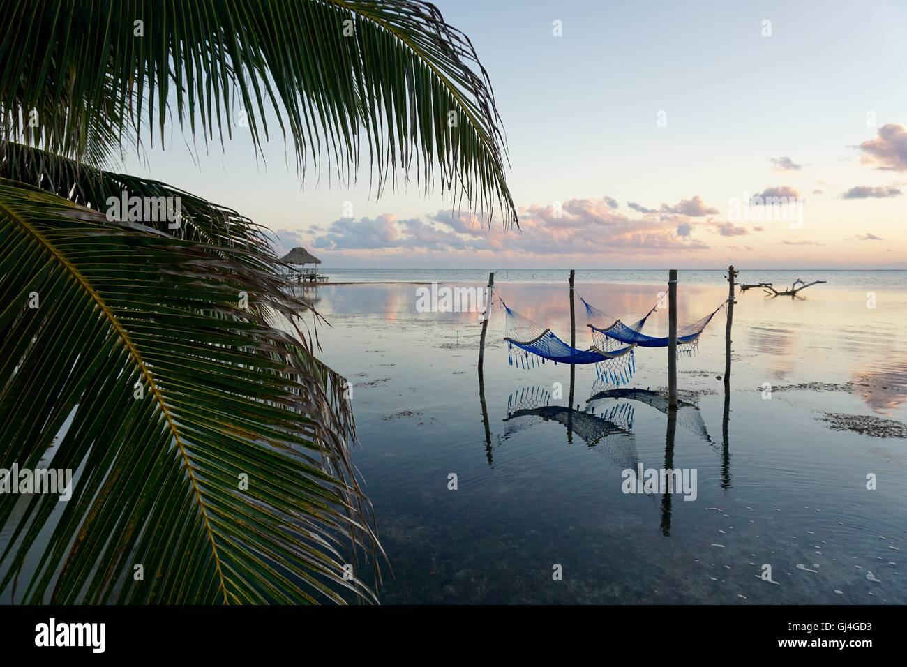 Hammocks on the ocean with reflection on the water and light pink clouds at the horizon. Photographed in Belize. - Stock Image