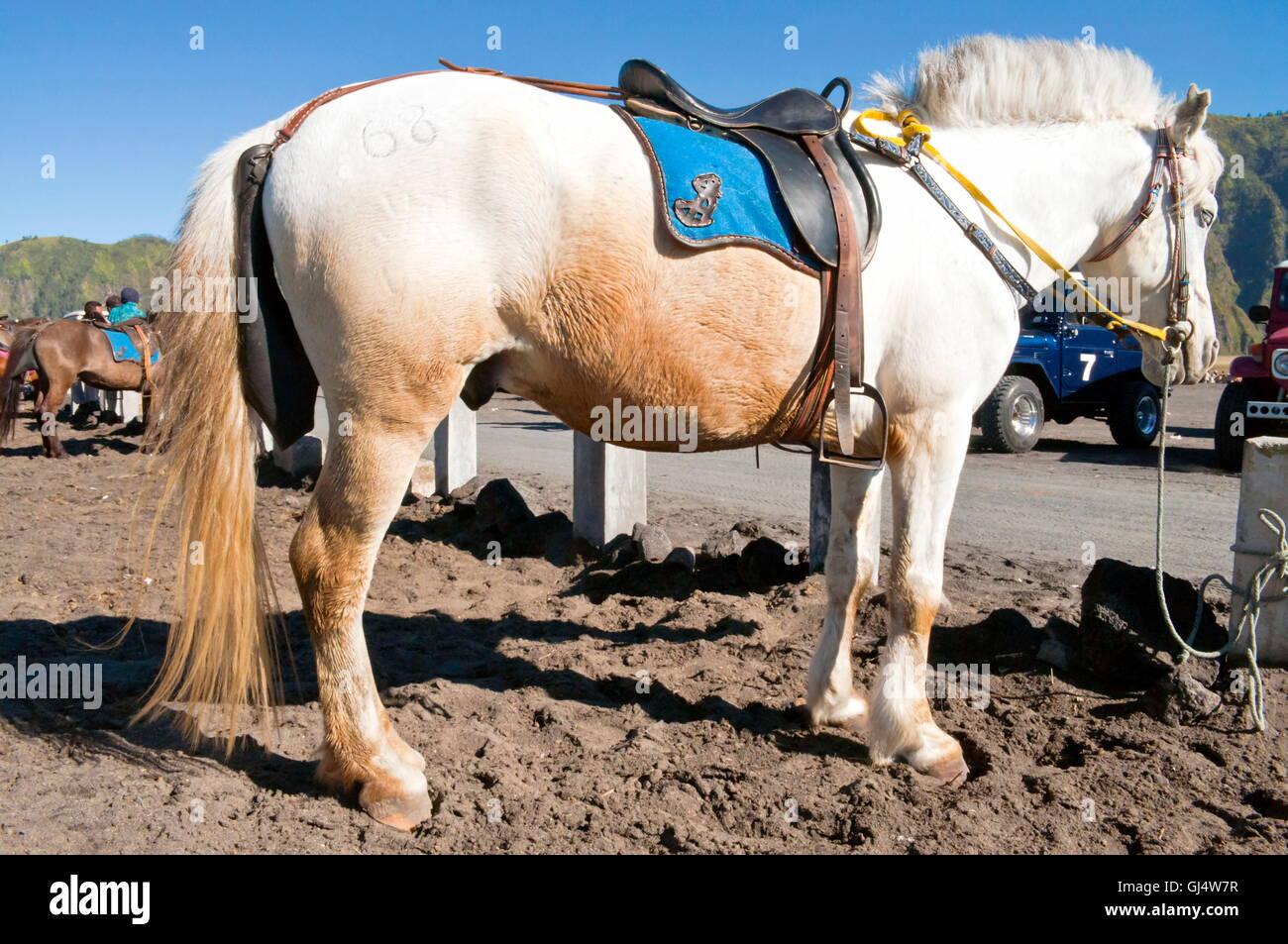 White and Orange Horse - Stock Image