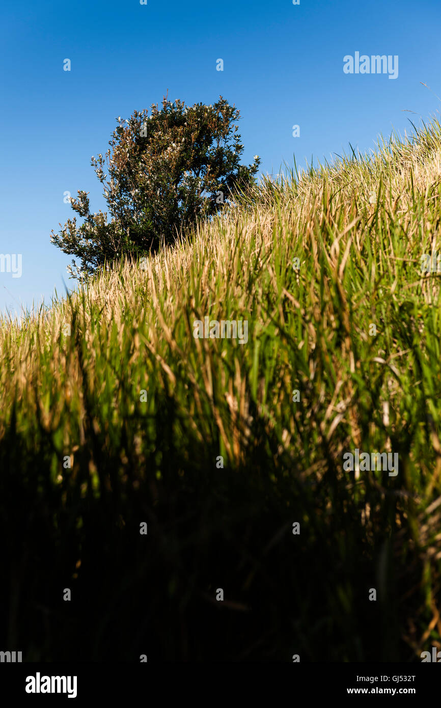 A tree and some tall grass at Cape Byron. - Stock Image