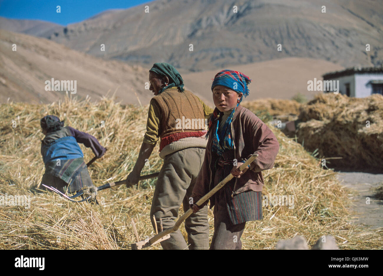 154 Family assisting with farm work including this boy with basic fork at village of Phadhruchi which is north of - Stock Image