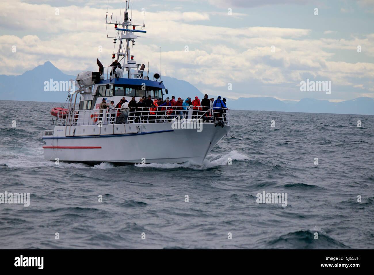 Impressionen: Boot zur Walbeobachtung, Nordmeer, Andenes, Vesteralen, Norwegen. - Stock Image
