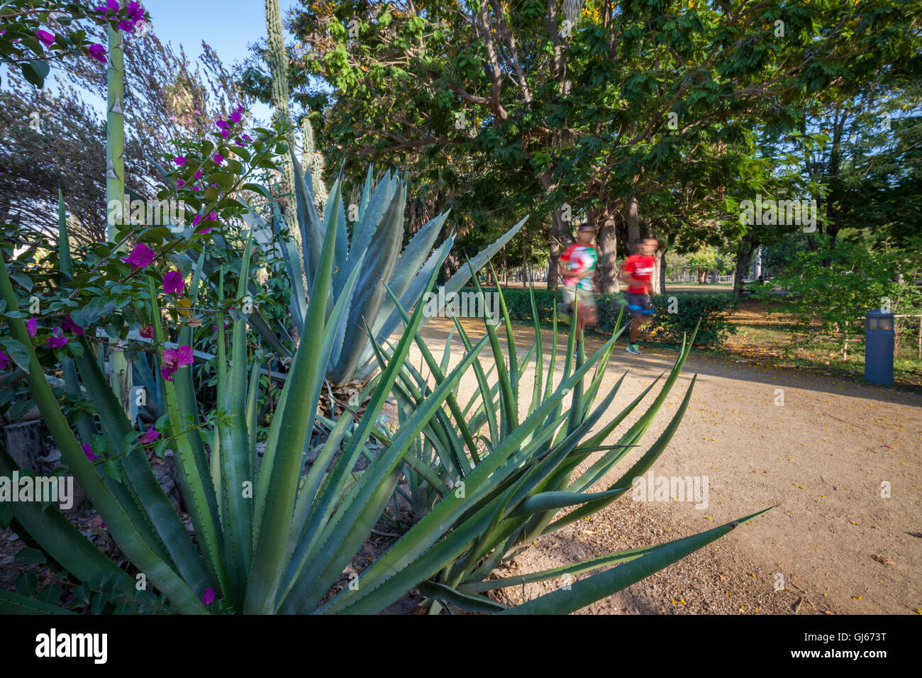 Runners on a trail in the Parque Botanico of Los Mochis, Sinaloa, Mexico. - Stock Image