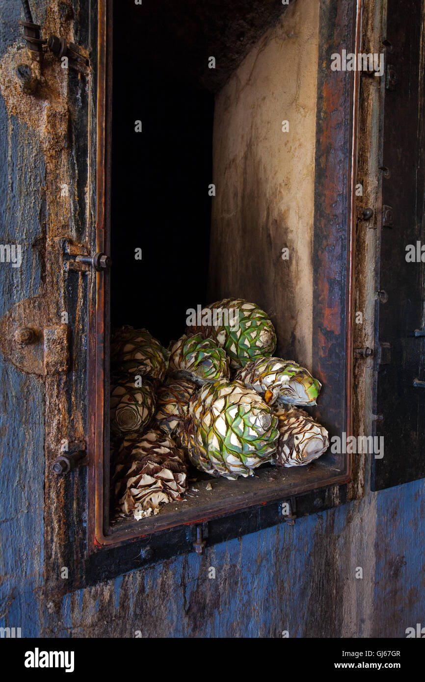 Harvested blue agave 'piñas' sit in an oven at Hacienda La Cofradia in Tequila, Jalisco, Mexico. - Stock Image