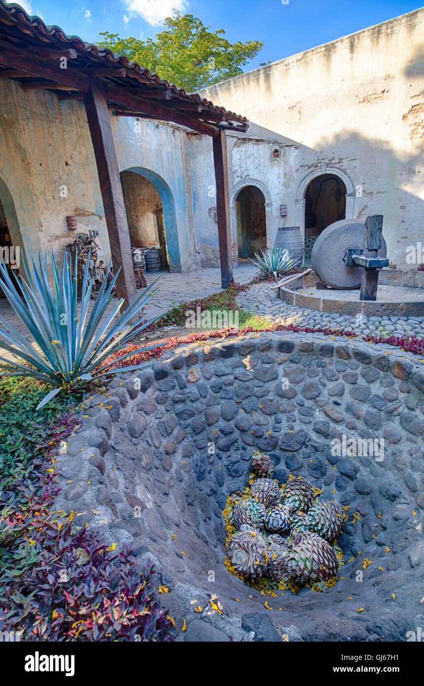Cores or 'piñas' of the blue agave cactus sit in an old cooking pit at the Hacienda of Jose Cuervo - Stock Image