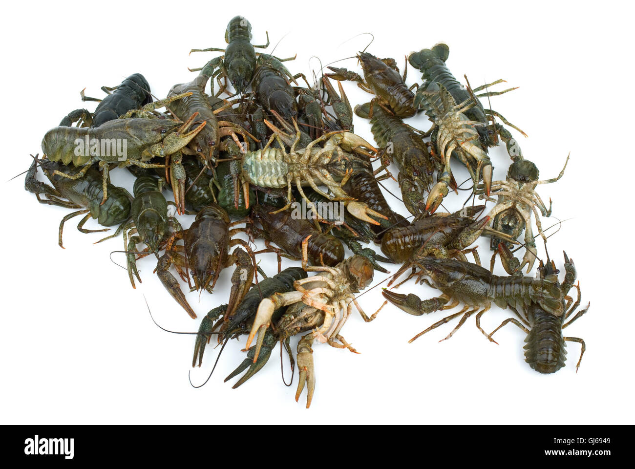 Pile of live crawfishes - Stock Image