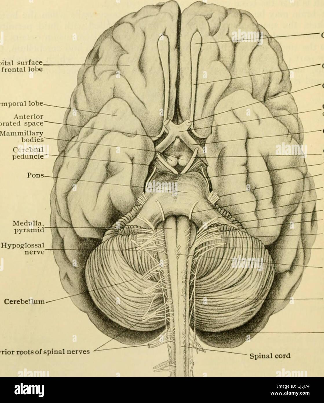Human Anatomy Including Structure Development Stock Photos & Human ...