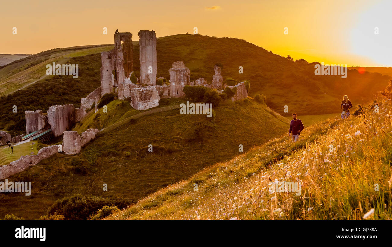 A Man and Woman walk past Corfe Castle through a wildflower meadow in golden orange setting sun light, Dorset UK - Stock Image