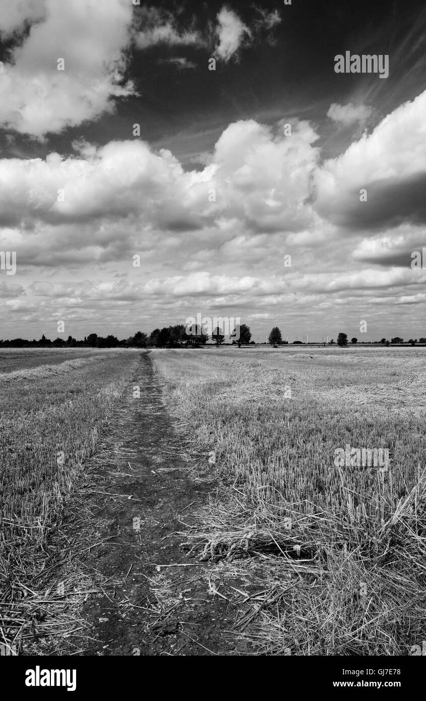 Summer view of a newly harvest wheat field showing a nature footpath extending to the horizon. - Stock Image