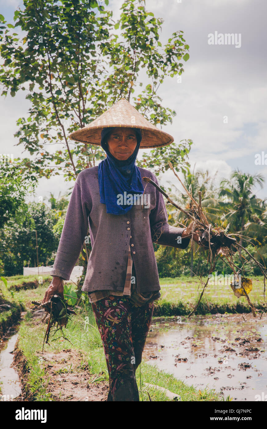 Woman works in the field on February 28, 2016 in Ubud, Bali, Indonesia - Stock Image