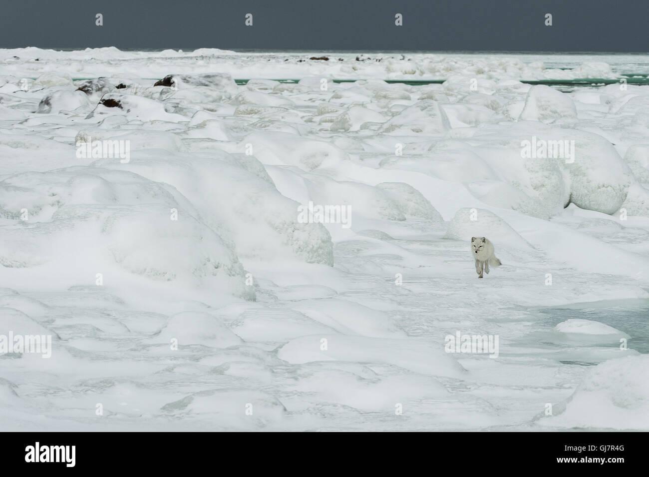 Path Across Frozen Arctic Tundra Was >> Tundra Biome Stock Photos Tundra Biome Stock Images Alamy