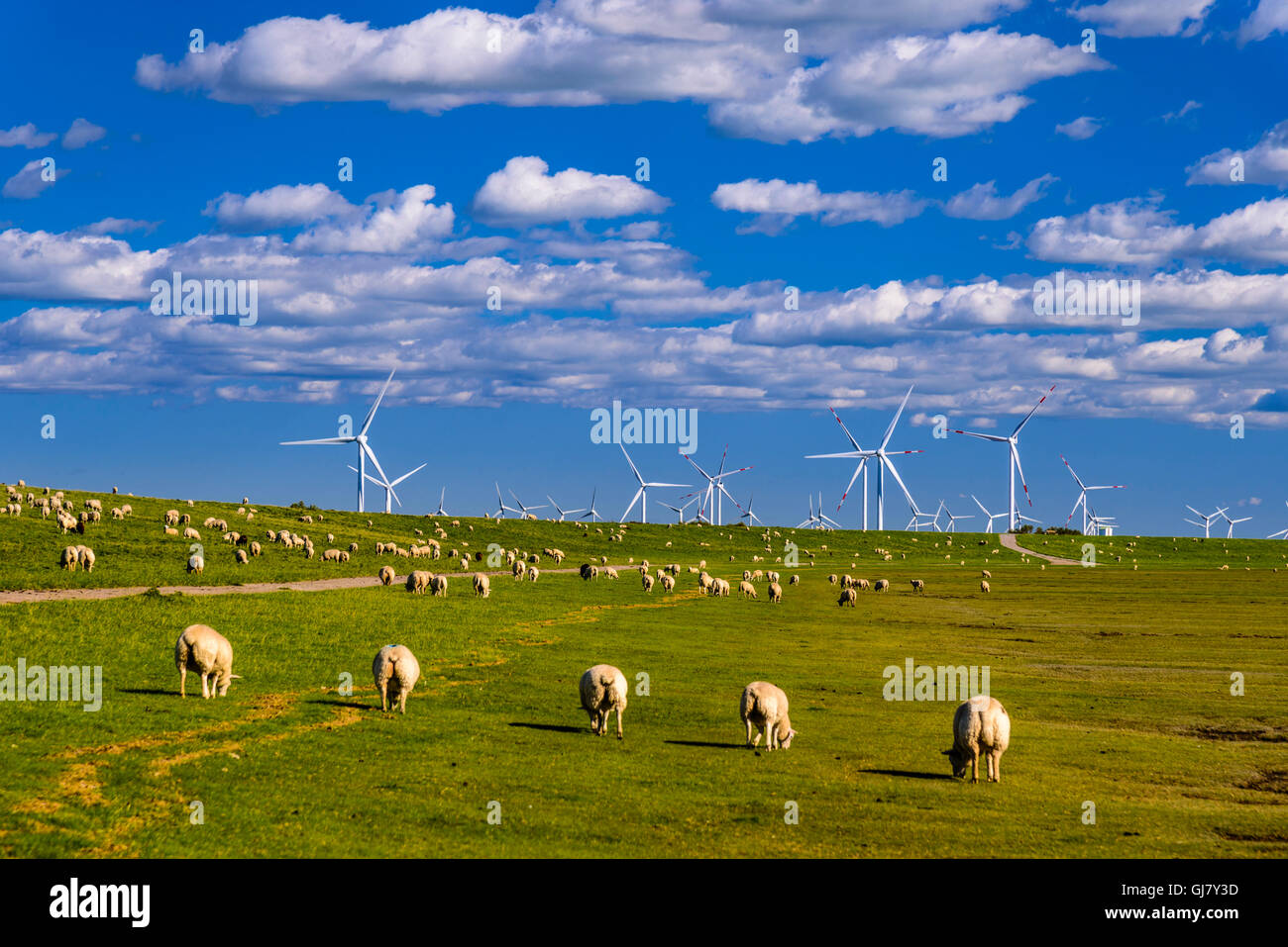 Sonke Nissen Koog Stock Photos & Sonke Nissen Koog Stock Images - Alamy
