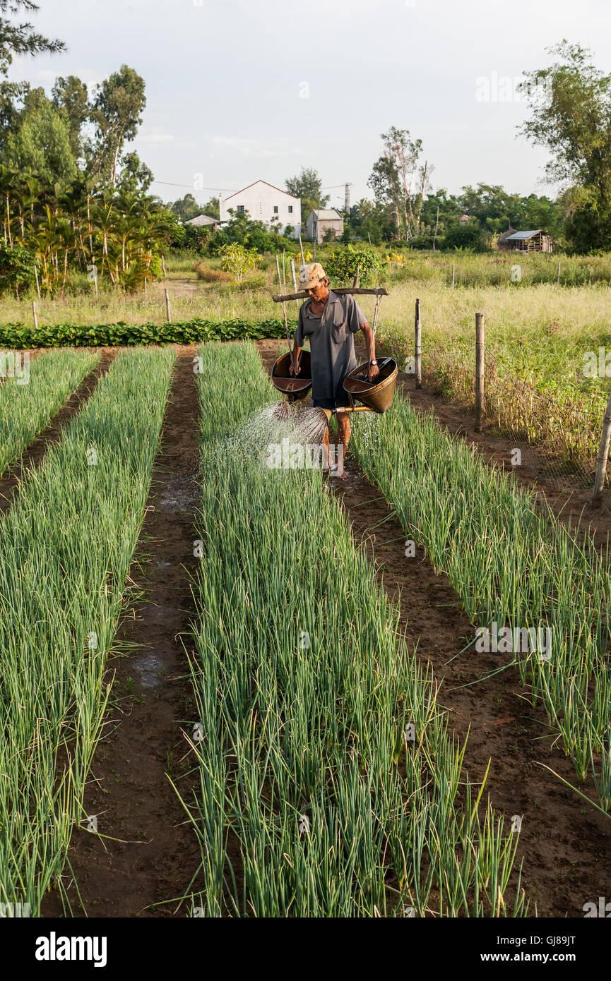 Bio vegetables in a field in Tra Que Stock Photo: 114509216
