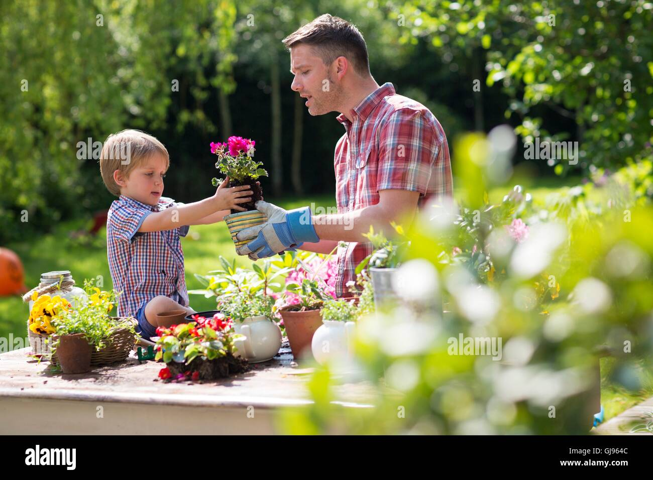 PROPERTY RELEASED. MODEL RELEASED. Father and son putting plant in plant pot. - Stock Image