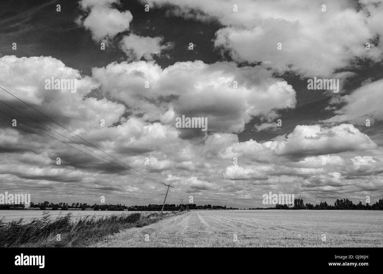 Summer cloudscape above a wheat field in summer, also showing power cables suspended from a bent power pole. - Stock Image